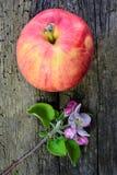 Λουλούδια της Apple και κόκκινο ώριμο μήλο Στοκ φωτογραφία με δικαίωμα ελεύθερης χρήσης