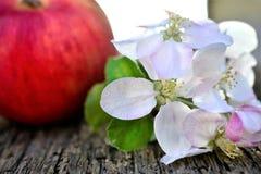 Λουλούδια της Apple και κόκκινο ώριμο μήλο Στοκ φωτογραφίες με δικαίωμα ελεύθερης χρήσης