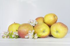 Λουλούδια της Apple και ώριμα μήλα σε ένα άσπρο ξύλινο υπόβαθρο Στοκ φωτογραφία με δικαίωμα ελεύθερης χρήσης