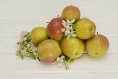 Λουλούδια της Apple και ώριμα μήλα σε ένα άσπρο ξύλινο υπόβαθρο Στοκ Φωτογραφία