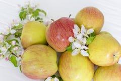Λουλούδια της Apple και ώριμα μήλα σε ένα άσπρο ξύλινο υπόβαθρο Στοκ Εικόνες