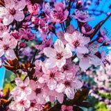 Λουλούδια τη συμπαθητική άνοιξη στοκ εικόνες με δικαίωμα ελεύθερης χρήσης