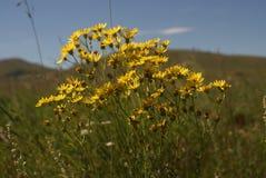 Λουλούδια, τομέας, χρώμα φύσης Στοκ Φωτογραφίες