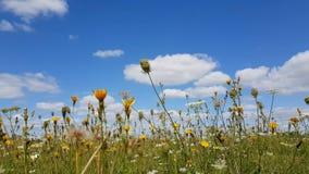 Λουλούδια τομέων φιλμ μικρού μήκους