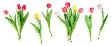 Λουλούδια τουλιπών καθορισμένα απομονωμένα στο λευκό με το ψαλίδισμα της πορείας συμπεριλαμβανόμενο στοκ φωτογραφία