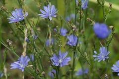Λουλούδια του ανθίζοντας ραδικιού Στοκ φωτογραφία με δικαίωμα ελεύθερης χρήσης