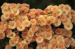 Λουλούδια του βοτανικού κήπου στοκ εικόνες με δικαίωμα ελεύθερης χρήσης
