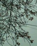 Λουλούδια του δέντρου Στοκ εικόνα με δικαίωμα ελεύθερης χρήσης