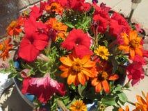 Λουλούδια του καλοκαιριού στοκ εικόνα