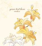 Λουλούδια του κρίνου διανυσματική απεικόνιση