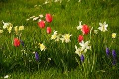 Λουλούδια των διαφορετικών χρωμάτων στον ήλιο Γαλλία Στοκ φωτογραφία με δικαίωμα ελεύθερης χρήσης