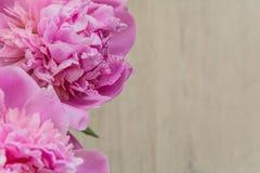 Λουλούδια των ρόδινων peonies την ημέρα μητέρων ` s Στοκ εικόνες με δικαίωμα ελεύθερης χρήσης