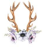 Λουλούδια, υάκινθος και ελαφόκερες anemone Watercolor Στοκ Φωτογραφίες