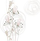 λουλούδια φαντασίας Στοκ Φωτογραφίες