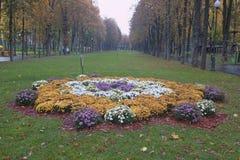 Λουλούδια φθινοπώρου σε ένα κρεβάτι στο πάρκο Kharkiv Γκόρκυ Στοκ εικόνα με δικαίωμα ελεύθερης χρήσης