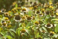 Λουλούδια φθινοπώρου στον κήπο στον ήλιο ρύθμισης, τρύγος Στοκ εικόνα με δικαίωμα ελεύθερης χρήσης