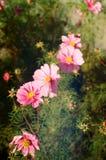 λουλούδια φθινοπώρου Στοκ φωτογραφίες με δικαίωμα ελεύθερης χρήσης