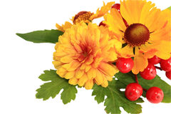 λουλούδια φθινοπώρου Στοκ εικόνες με δικαίωμα ελεύθερης χρήσης