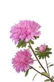 Λουλούδια φθινοπώρου Στοκ Φωτογραφίες