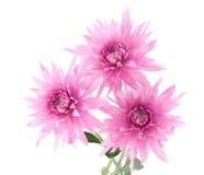 λουλούδια φθινοπώρου Στοκ Εικόνα