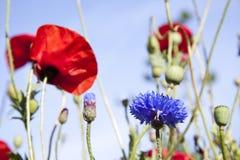 λουλούδια φυσικά Στοκ Εικόνες