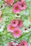 λουλούδια φόντου Στοκ Φωτογραφία