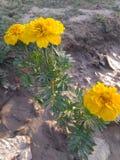 λουλούδια φύσης στοκ φωτογραφία