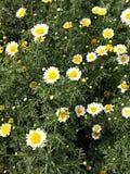 λουλούδια φύσης Στοκ εικόνες με δικαίωμα ελεύθερης χρήσης