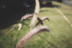Λουλούδια χλόης στον κήπο στοκ φωτογραφίες
