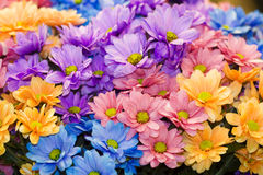 λουλούδια χρυσάνθεμων ανθοδεσμών Στοκ φωτογραφία με δικαίωμα ελεύθερης χρήσης