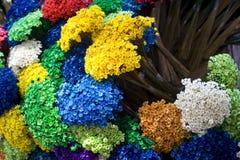 λουλούδια χρωμάτων πολ&upsi Στοκ φωτογραφίες με δικαίωμα ελεύθερης χρήσης
