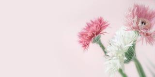Λουλούδια χρώματος κρητιδογραφιών στο ρόδινο υπόβαθρο, μπροστινή άποψη Στοκ εικόνες με δικαίωμα ελεύθερης χρήσης