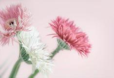 Λουλούδια χρώματος κρητιδογραφιών στο ρόδινο υπόβαθρο, μπροστινή άποψη Στοκ Φωτογραφίες