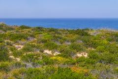 Λουλούδια, ωκεανός και βλάστηση σε Arrifana Στοκ φωτογραφίες με δικαίωμα ελεύθερης χρήσης