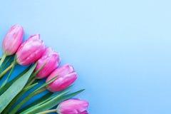 Ρόδινες τουλίπες στο μπλε υπόβαθρο λουλούδια ως δώρο στοκ εικόνες