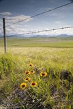 λουλούδια 1 φραγής Στοκ Εικόνες