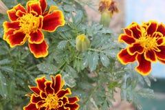 3 λουλούδια Στοκ Εικόνες
