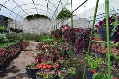 Λουλούδια Agricultur στο δοχείο Στοκ Εικόνα