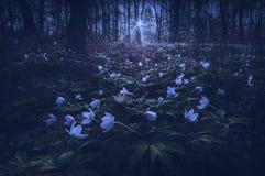 Λουλούδια Anemona σε ένα φως του φεγγαριού αύξησης Στοκ Εικόνες