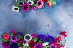 Λουλούδια Anemones στο υπόβαθρο πετρών Στοκ Εικόνα