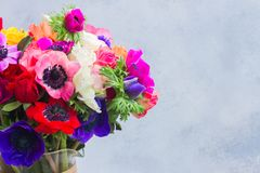 Λουλούδια Anemones στο υπόβαθρο πετρών Στοκ Εικόνες