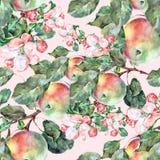 Λουλούδια Apple Watercolor με τα φρούτα Άνευ ραφής σχέδιο χειροτεχνίας σε ένα ρόδινο υπόβαθρο Στοκ εικόνα με δικαίωμα ελεύθερης χρήσης