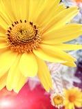 Λουλούδια Bokeh που τονίζεται Στοκ Φωτογραφία
