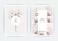 Λουλούδια Calendula, χρυσάνθεμο, Chamomile, Daisy, αστέρας καρτών Στοκ Εικόνες