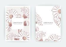 Λουλούδια Calendula, χρυσάνθεμο, Chamomile, Daisy, αστέρας καρτών Στοκ Φωτογραφίες