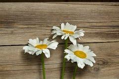 Λουλούδια Chamomile σε έναν ξύλινο Στοκ Φωτογραφίες