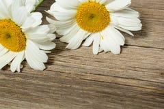 Λουλούδια Chamomile σε έναν ξύλινο Στοκ φωτογραφία με δικαίωμα ελεύθερης χρήσης
