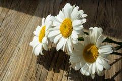 Λουλούδια Chamomile σε έναν ξύλινο Στοκ Εικόνες
