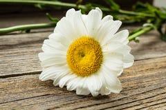Λουλούδια Chamomile σε έναν ξύλινο Στοκ Φωτογραφία