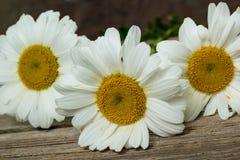 Λουλούδια Chamomile σε έναν ξύλινο Στοκ φωτογραφίες με δικαίωμα ελεύθερης χρήσης
